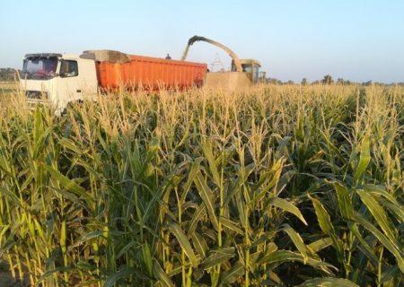 بیش از ۳۵ میلیارد ریال تسهیلات برای خرید ادوات کشاورزی در نیریز پرداخت شد