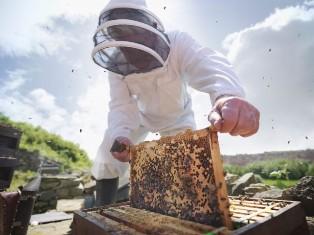 استقرار ۷۰ هزار کلنی زنبور عسل در لارستان